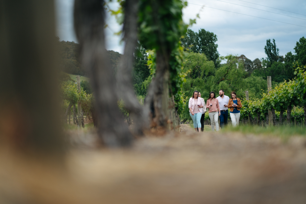 A group of five adults stroll through a vineyard.