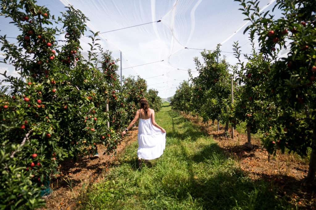 Batlow Apple Orchard